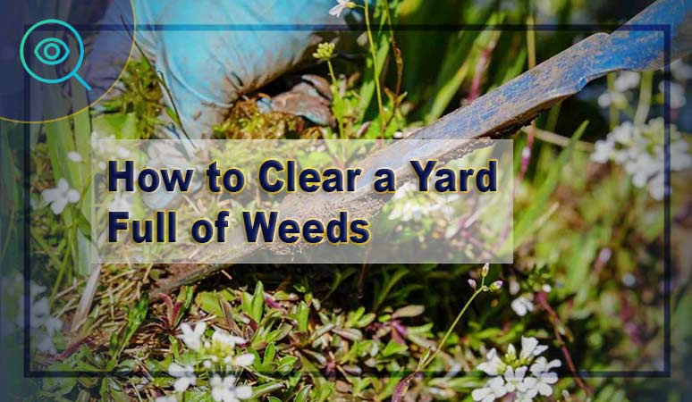 How-to-Clear-a-Yard-Full-of-Weeds