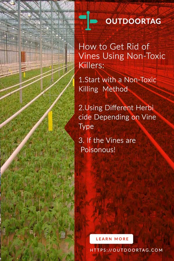 How to Get Rid of Vines