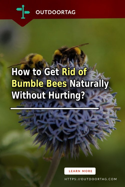 How to Get Rid of  Bumble Bees Naturally Without Hurting