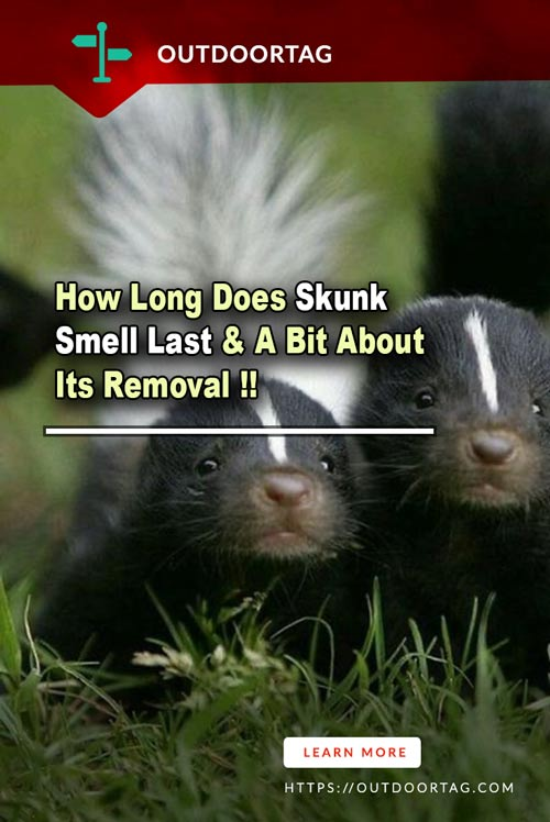 How Long Does Skunk Smell Last & A Bit About Its Removal
