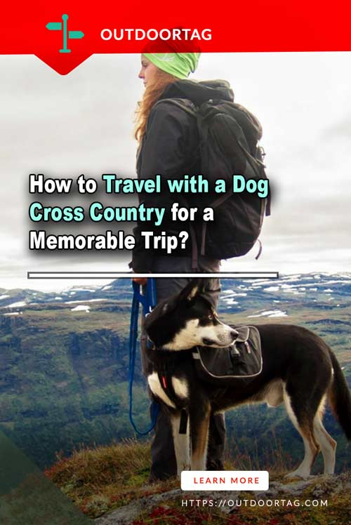 How to Travel with a Dog Cross Country for a Memorable Trip