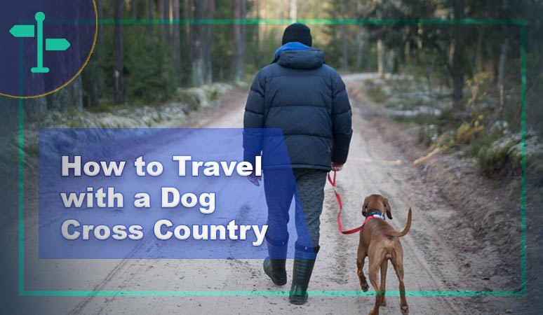 How to Travel with a Dog Cross Country