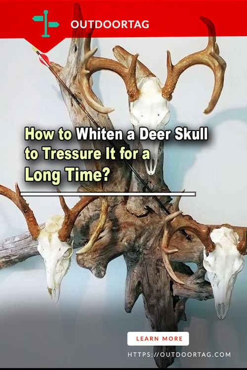 How to Whiten a Deer Skull to Tressure It for a Long Time?
