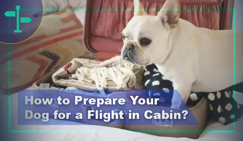 How to Prepare Your Dog for a Flight in Cabin