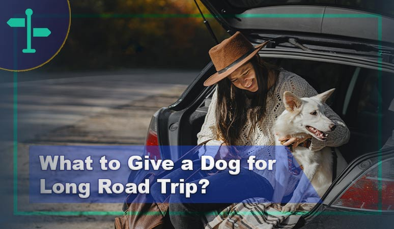 What to Give a Dog for Long Road Trip